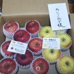 長野県飯山市のみなさんから立派なリンゴが届きました
